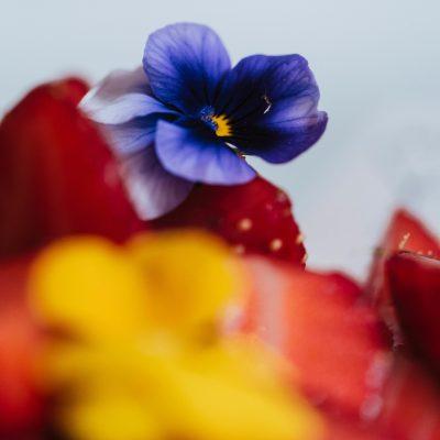 Guillaume_cuoco_tarte_fraises-1