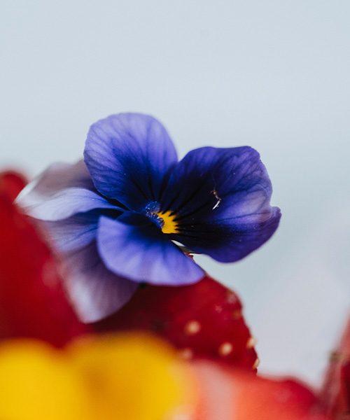gateau_fleur